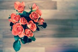 roses-690085.jpeg