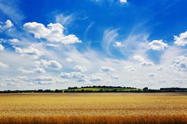 lata-pole-przeciw-niebieskiemu-niebu-piekny-krajobraz_2829-11147.jpeg